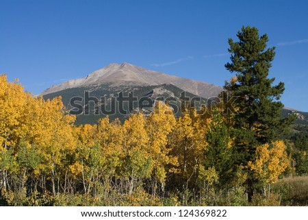 Aspen trees turning to a bright yellow in front of Longs Peak, in Rocky Mountain National Park near Estes Park, Colorado. - stock photo