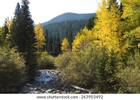 Aspens and firs in a mountain setting next to a running rocky stream - stock photo