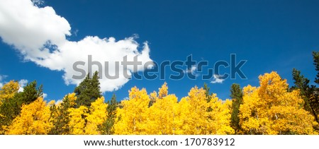 Aspens and pine trees with blue sky and fluffy white clouds - stock photo