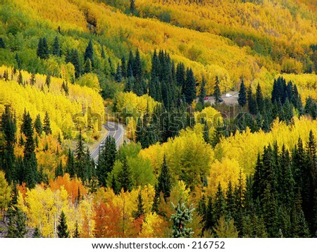 Aspens, Million Dollar Highway, Colorado