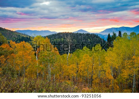Aspens turning Yellow at Sunrise - stock photo