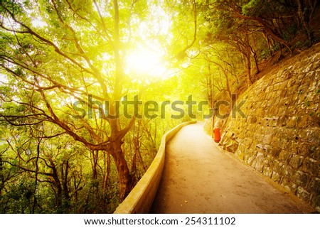 Asphalt road for tourists in the mountains. Sunset under the trees. Forest. - stock photo