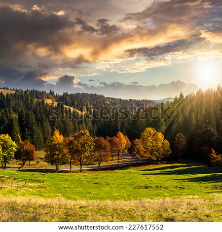 asphalt road going through green meadow with trees near autumn forest with foliage in mountains at sunset