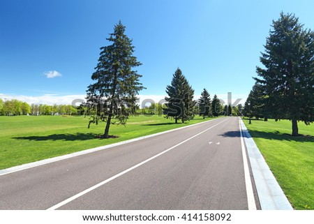 asphalt road in park between pine trees and grass