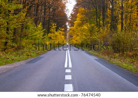 asphalt road in the autumn woods