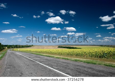 Asphalt road stretching out into the sunflower fields - stock photo