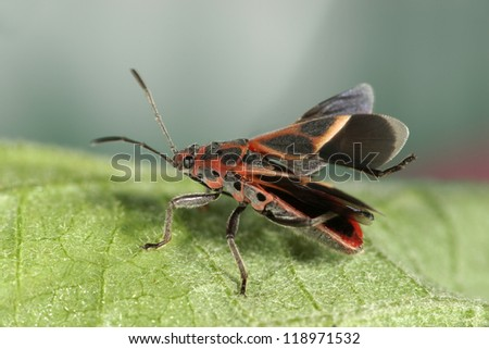 Assassin bug - red - stock photo