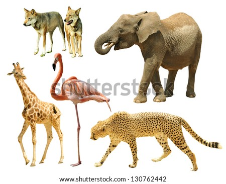 Assembling of wild animals isolated on white background - stock photo