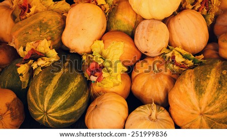 Assorted autumn pumpkins, squash and gourds with a scattering of colorful fall leaves depicting Thanksgiving, the season and agricultural harvests - stock photo