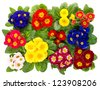 assorted colorful fresh spring primula flowers isolated on white background. top view - stock photo