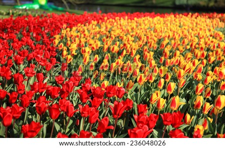 Assorted flowers in a Dutch spring garden. - stock photo