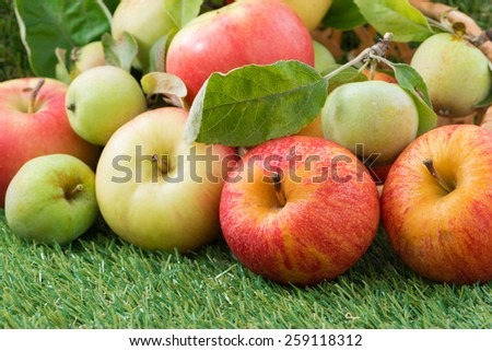 assorted fresh garden apples on green grass, horizontal - stock photo