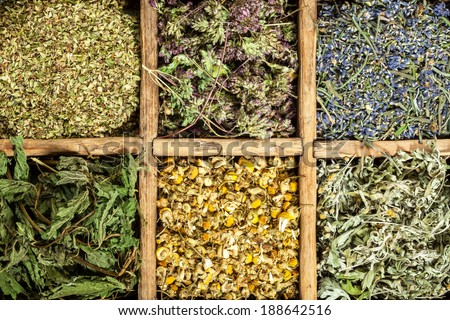 Assorted natural medical  dried herbs. - stock photo