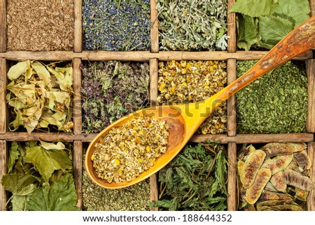 Assorted natural medical medical  dried herbs. - stock photo
