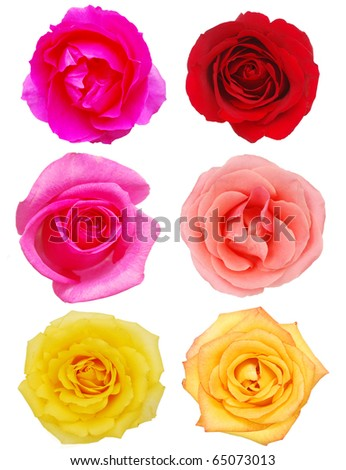 Assorted on rose blooms - stock photo