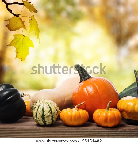 Assorted pumpkins and squashes on rustic wooden boards with an shinning autumn backdrop - stock photo