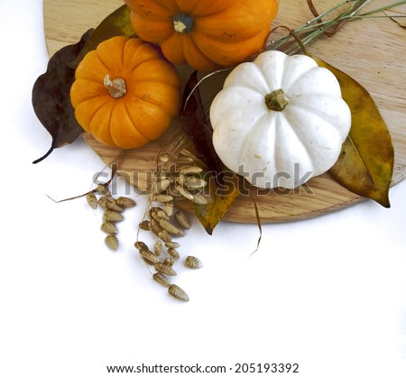 Assorted pumpkins and squashes on rustic wooden boards with an shinning autumn backdrop with copy space - stock photo