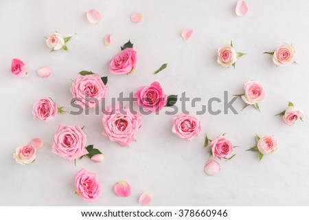 Assorted roses  heads. Various soft roses  and leaves scattered on a vintage background, overhead view - stock photo