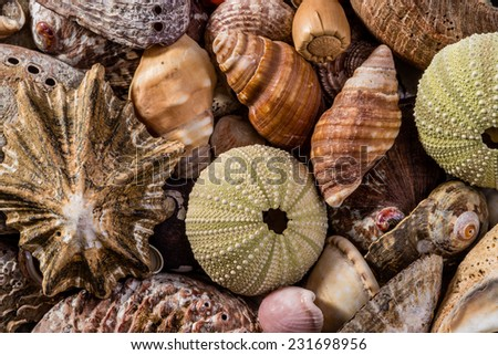 Assorted Sea Shells and sea urchins all mixed together and up close. - stock photo