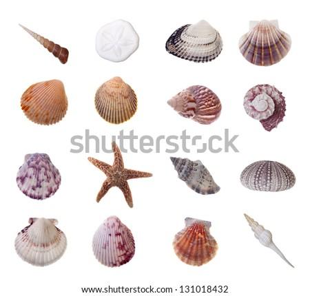 Assorted Seashells Isolated on White Background - stock photo