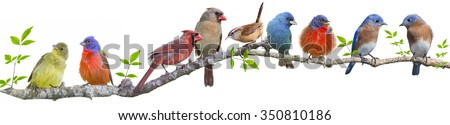 Assorted Songbirds on a Leafy Branch - stock photo