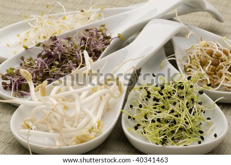 Assorted sprouts in white spoons. Selective focus. - stock photo