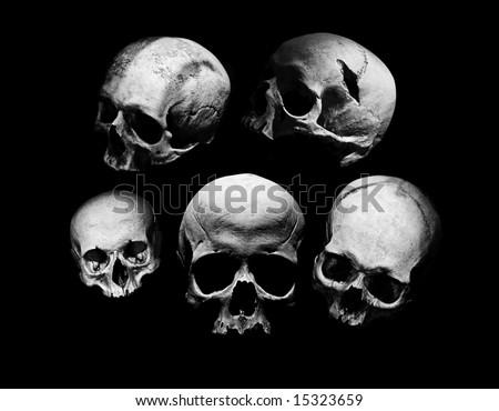 assortment of different kind of human skulls - stock photo