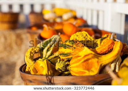 assortment of different pumpkins and gourds at farmers marker or pumpkin patch at fall