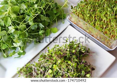 assortment of microgreens - stock photo
