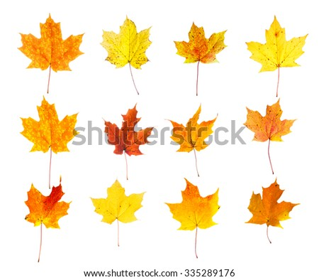 Assortment of Orange, Yellow and Red Autumn Maple Leaves Isolated on White Background - stock photo