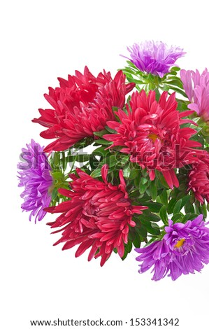 aster flowers isolated on white background - stock photo