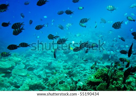 Astonishing undersea world of Red sea. - stock photo