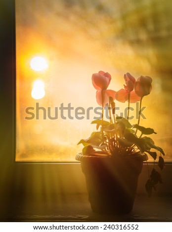 At a window stand flowers, behind a window a sunny evening. - stock photo