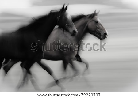 At high speed running horse in a farmland - stock photo