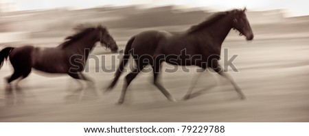 At high speed running horses in a farmland - stock photo