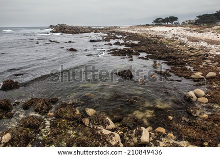 At low tide, kelp and algae are left to dry along the rocky coast of Monterey Bay. - stock photo
