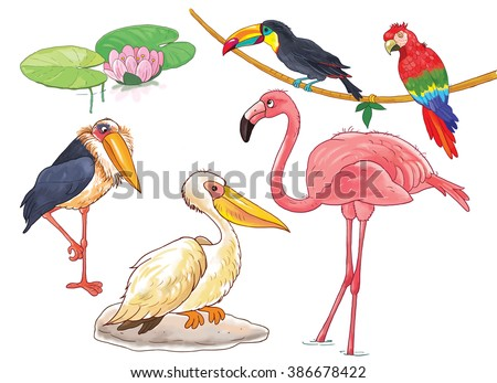 At the zoo. African animals. Small set of African birds. Cute flamingo, pelican, marabou, toucan and parrot. Illustration for children. Cartoon characters. Coloring book. Coloring page. isolated. - stock photo