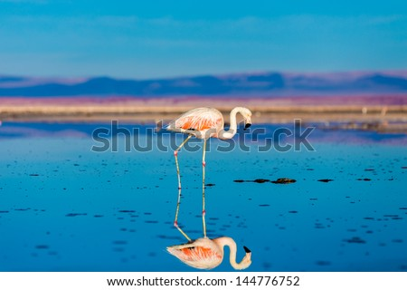Atacama Salar in Chile with Flamingo - stock photo