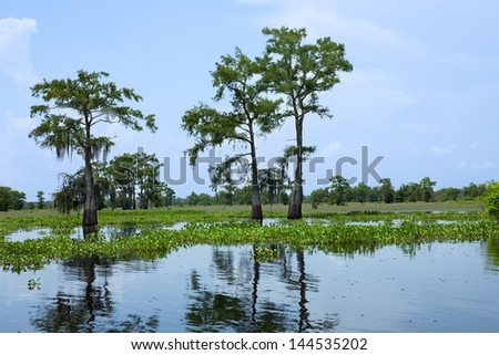 Atchafalaya River Basin, with Cypress. - stock photo