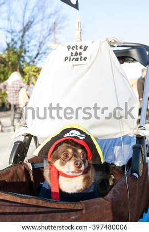 ATLANTA, GA - DECEMBER 5:  A dog dressed like a pirate sits in a baby stroller outfitted like a pirate ship at the conclusion of a dog costume parade on December 5, 2015 in Atlanta, GA.  - stock photo