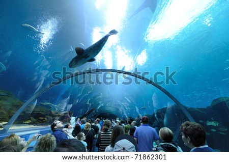 ATLANTA, GEORGIA - FEBRUARY 20: Aquatic tunnel in the Georgia Aquarium, the world's largest aquarium holding more than 8 million gallons of water February 20, 2011 in Atlanta, Georgia. - stock photo