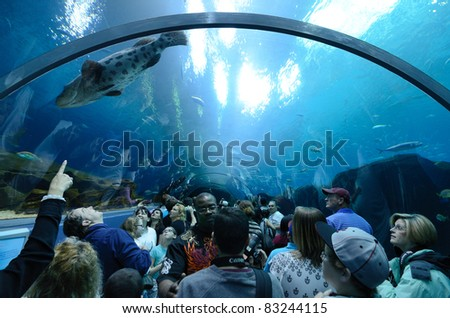 ATLANTA, GEORGIA - FEBRUARY 21: Aquatic tunnel in the Georgia Aquarium, the world's largest aquarium holding more than 8 million gallons of water February 21, 2011 in Atlanta, Georgia. - stock photo