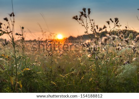 atmosferic sunset over the field with weed