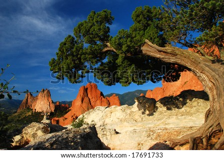 Atop white rock ridge is a twisted Juniper Tree at the Garden of the Gods near Colorado Springs, Colorado