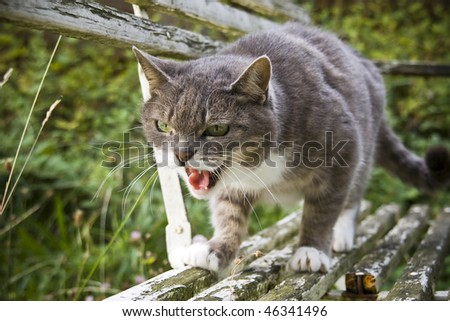 attacking cat - stock photo
