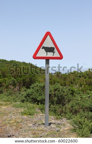 attention of cows - stock photo