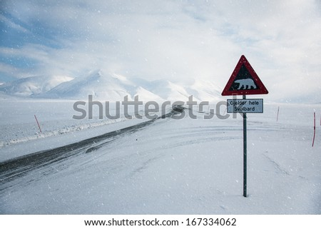 Attention,polar bear crossing! Arctic North Pole, Svalbard.  - stock photo