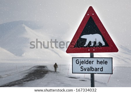Attention,polar bear crossing! Arctic North Pole, Svalbard. In a background is male silhouette of a back side,unrecognizable  - stock photo