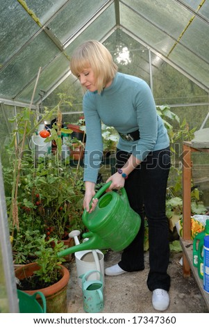 attractive lady with watering can tending to tomato plants