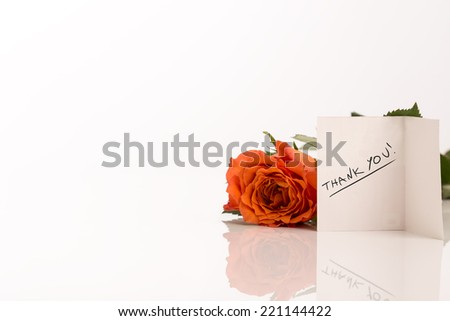 Attractive Orange Rose Besides Small Thank You Greeting Card Isolated on White. - stock photo